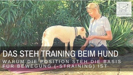 Das Steh Training beim Hund – warum die Position Steh die Basis für Bewegung (-straining) ist