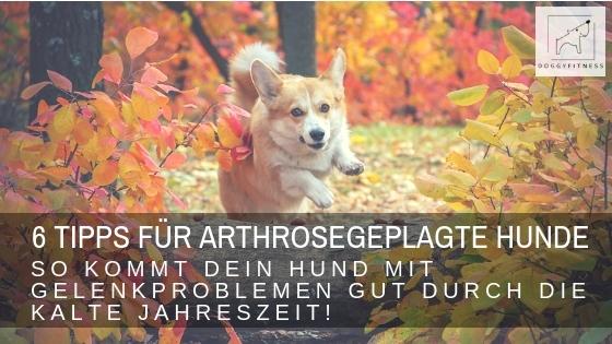 6 wertvolle Tipps für den Herbst – so unterstützt du deinen arthrosegeplagten Hund