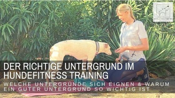Der richtige Untergrund im Bewegungs- und Fitnesstraining für Hunde – warum er so wichtig ist!