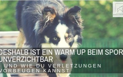 Mit Warm Up Verletzungen beim Sporthund vorbeugen – Teil 1