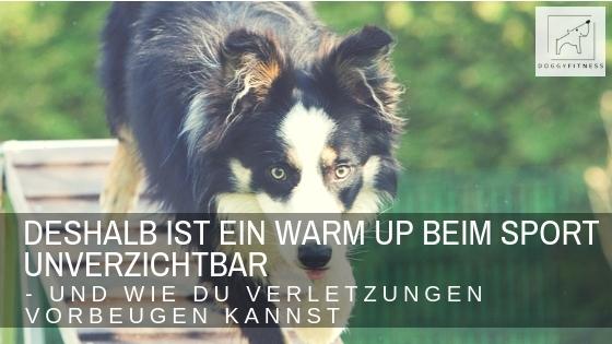 Blogtitel Doggy Fitness Warm Up beim Sporthund - deshalb ist es so wichtig und so baust du es richtig auf