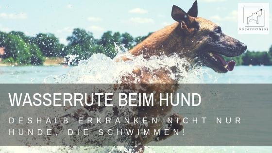 Wasserrute – deshalb erkranken nicht nur Hunde, die schwimmen