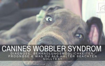 Das Wobbler Syndrom – Diagnose, Behandlungsmöglichkeiten, Prognose & was du als Halter beachten solltest