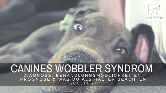 Das Wobbler Syndrom - erfahre alles über Diagnose, Behandlungsmöglichkeiten, Prognose & was du als Halter beachten solltest.