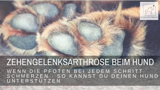 Zehengelenksarthrose beim Hund – wenn die Pfoten bei jedem Schritt schmerzen