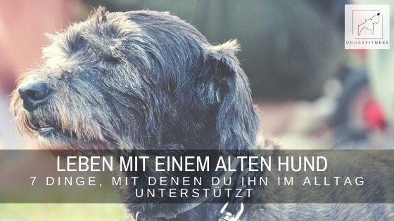 Ein alter Hund braucht häufig Unterstützung im Alltag. Ich verrate dir sieben Dinge, mit denen du sein Leben enorm erleichtern kannst.