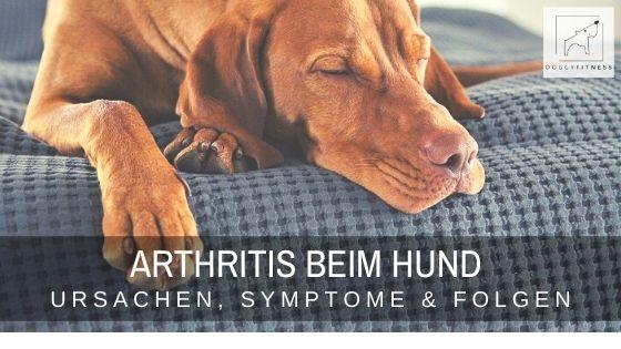 Arthritis beim Hund - Ursachen, Symptome, Folgen