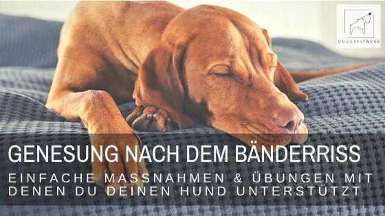 Der Bänderriss beim Hund - mit diesen einfachen Massnahmen kannst du die Gesundung deines Vierbeiners selbst aktiv unterstützen.
