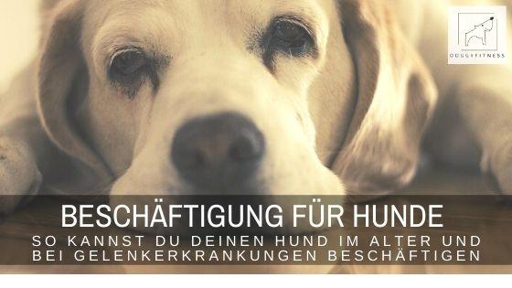 Beschäftigung für Hunde – so kannst du deinen Hund im Alter und bei Gelenkerkrankungen beschäftigen