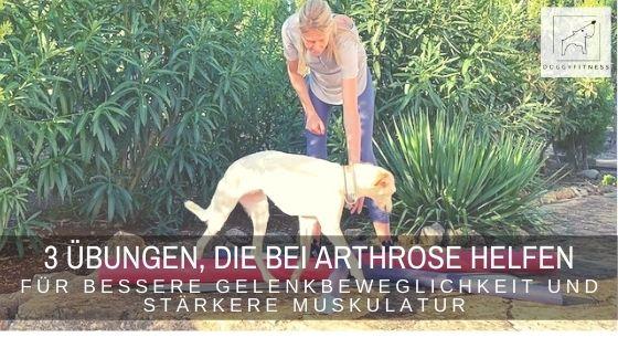 Bewegungstraining bei Arthrose beim Hund – diese 3 aktive Übungen fördern die Gelenkbeweglichkeit und stärken die Muskulatur
