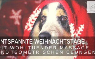 Entspannte Weihnachtstage für deinen Hund – Wohlfühlmomente mit Massage & Co.