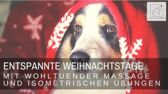 Entspannte Weihnachtstage für deinen Hund - mit sanfter Massage, isometrischen Übungen und wohltuender Pfotenmassage