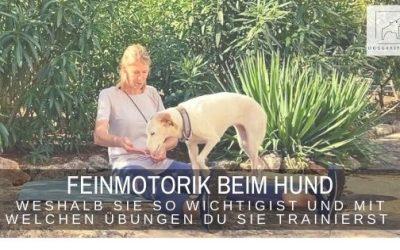 Feinmotorik beim Hund – mit diesen Übungen förderst du sie
