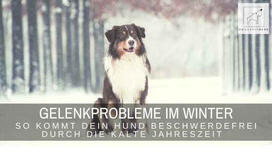 Mein neuer Artikel bei MEIN HERZ BELLT zeigt euch, wie dein Vierbeiner beschwerdefrei durch den Winter kommt