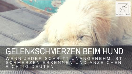 Gelenkschmerzen beim Hund – wenn jeder Schritt unangenehm ist