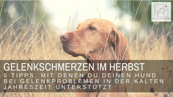 Gelenkschmerzen beim Hund - besonders im Herbst und Winter tun die Gelenke besonders weh. Diese 5 Dinge helfen bei Arthrose & Co.