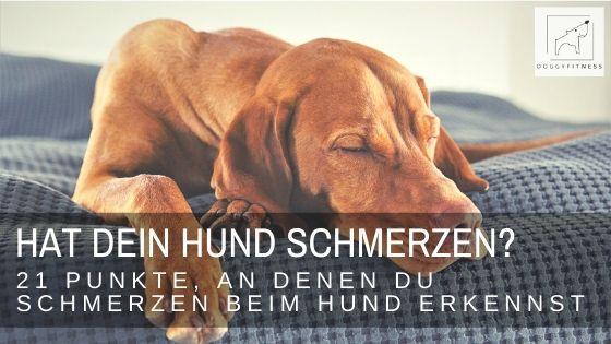 Daran erkennst du, ob dein Hund Schmerzen hat! Dein Hund kann dir nicht sagen, wenn er Schmerzen hat. So erkennst du es auf jeden Fall und kannst handeln!