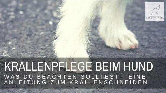 Doggy Fitness Blog - Wie geht Krallenschneiden richtig