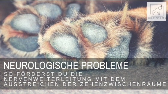 Neurologische Probleme beim Hund – so förderst du die Nervenweiterleitung mit dem Ausstreichen der Zehenzwischenräume
