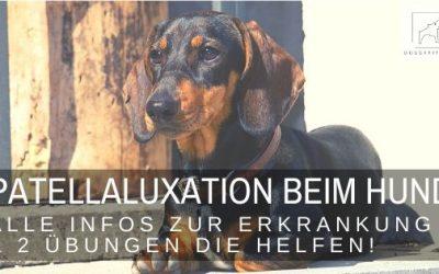 Patellaluxation – das Krankheitsbild und wie du deinem Hund hilfst