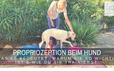 Propriozeption beim Hund – was es bedeutet, warum sie so wichtig ist und wie du sie trainieren kannst