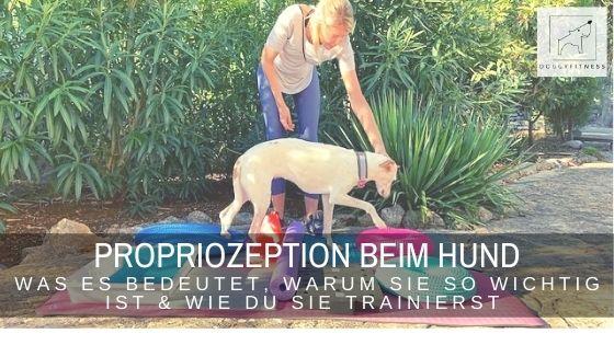 Propriozeption beim Hund - die Eigenwahrnehmung des Körpers. Erfahre hier, warum sie wichtig ist und wie du sie trainierst.