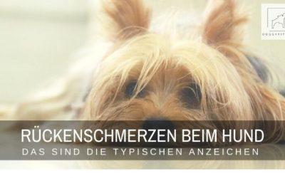 Rückenschmerzen beim Hund – so erkennst du sie!
