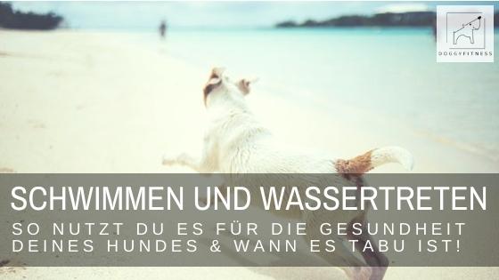 Schwimmen oder Wassertreten ist für Hunde mit Gelenkerkrankungen eine gute Übung. Du trainierst Muskulatur, Beweglichkeit und Körpergefühl.