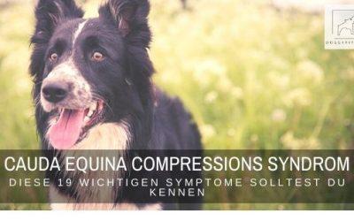 Diese 19 wichtigsten Symptome des Cauda Equina Compressions Syndrom solltest du kennen!