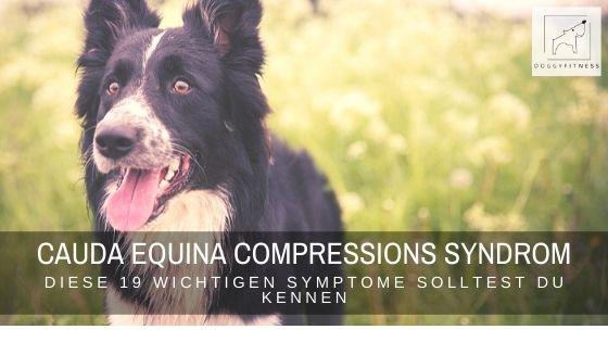 Das Cauda Equina Compressions Syndrom (kurz: CECS) trifft oft Schäferhunde, Boxer und Rottweiler. Aber Achtung: theoretisch kann jeder Hund betroffen sein!