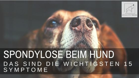 oggy Fitness - 15 Anzeichen für Spondylose beim Hund