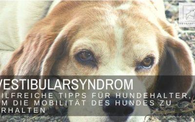 Vestibularsyndrom – so unterstützt du die Mobilität des Hundes