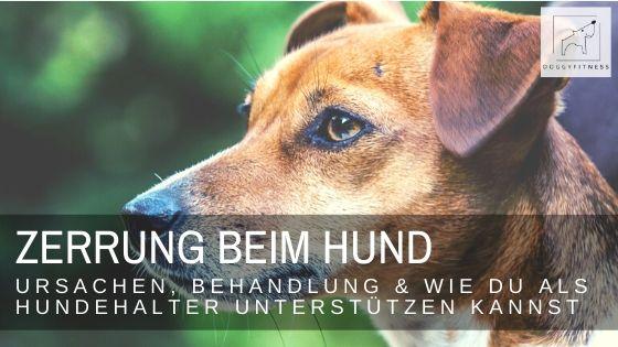 Eine Zerrung beim Hund ist wie für uns Menschen sehr schmerzhaft. Wie sie entsteht, was sie bedeutet und wie man sie behandelt, erfährst du hier.