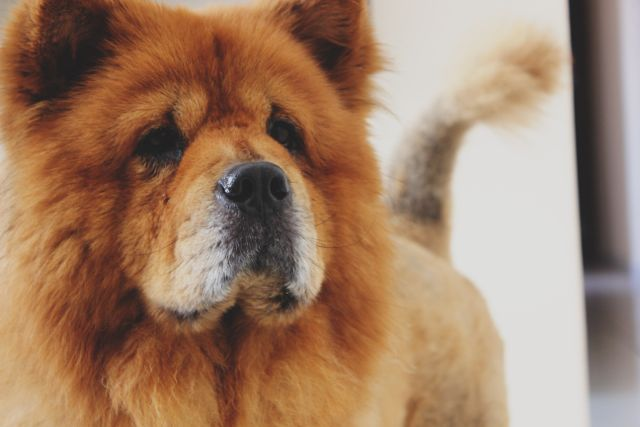 Bandscheibenvorfall beim Hund – was bedeutet das für deinen Vierbeiner?