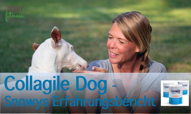 Kollagenpeptide für den Hund – Unsere Erfahrung mit Collagile Dog