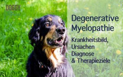 Degenerative Myelopathie Teil I – das Krankheitsbild, Ursachen, Diagnose & Therapieziele