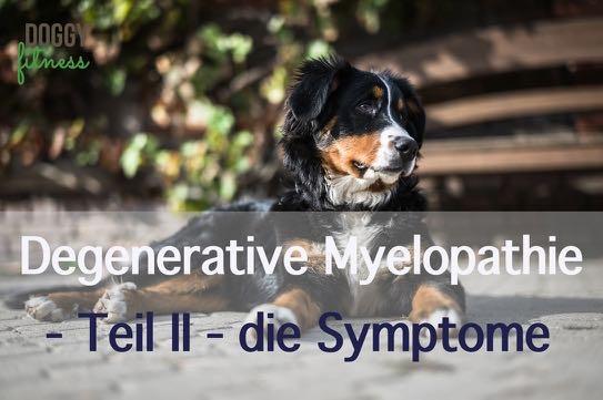 Degenerative Myelopathie Teil II – die Symptome