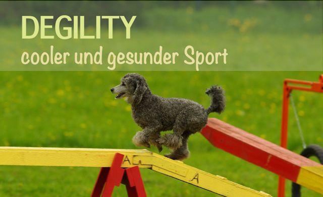 Degility – gesunder und cooler Sport für deinen Hund!