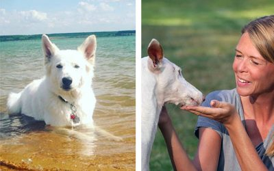 Hundeblogger Domino – wir sind dabei!