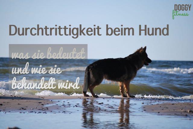Durchtrittigkeit beim Hund – was sie bedeutet und wie sie behandelt wird