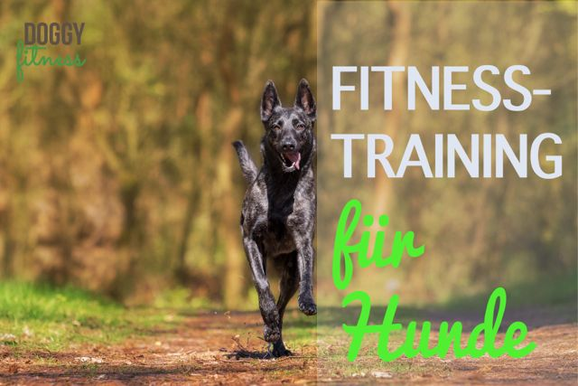 Fitnesstraining für Hunde Doggy Fitness Übungen Hund