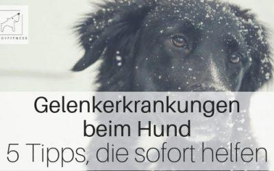 Gelenkerkrankungen beim Hund – 5 Tipps die ihm sofort helfen