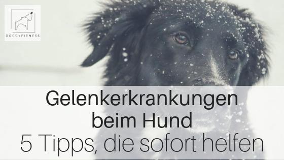 Gelenkerkrankungen beim Hund - 5 Tipps, die sofort helfen