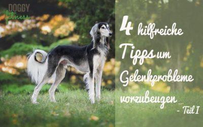 4 hilfreiche Tipps um Gelenkprobleme beim Hund vorzubeugen – Teil I