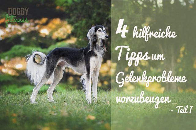 Tipps um Gelenkprobleme beim Hund vorzubeugen Doggy Fitness
