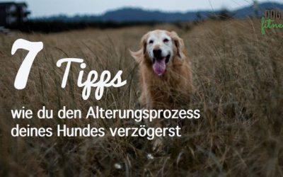 7 Tipps, wie du den Alterungsprozess deines Hundes verzögerst