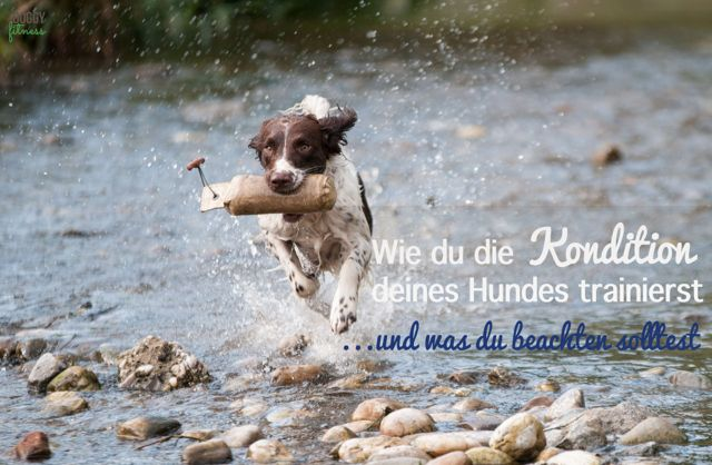 So trainierst du die Kondition deines Hundes. Effektives Konditionstraining beim Hund Doggy Fitness