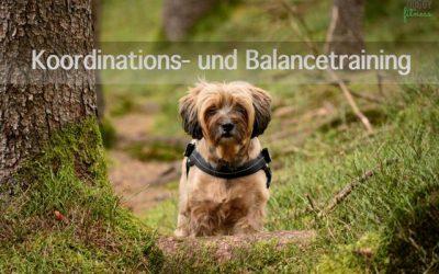 Koordinations- und Balancetraining – Laufen über verschiedenen Untergründe
