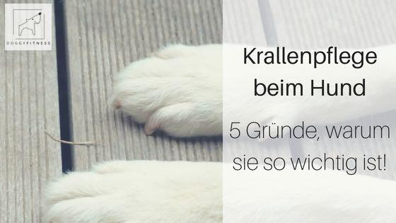 Krallenpflege beim Hund – 5 Gründe warum sie so wichtig ist!