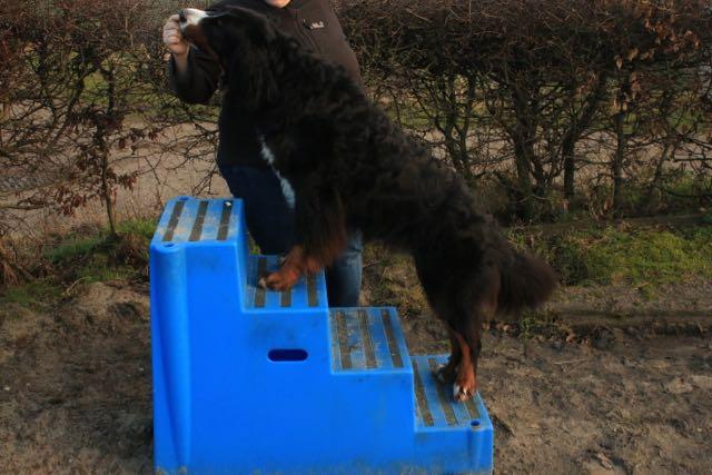 schutz nach hunde op am hinterlauf